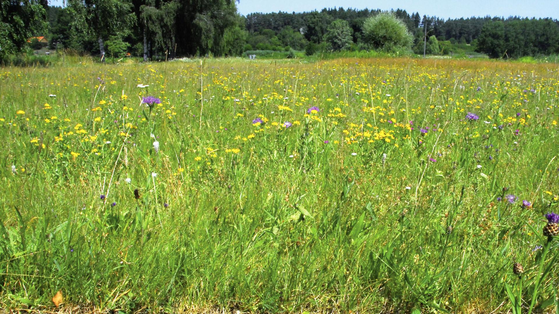 Kräuter-Gräser-Rasen